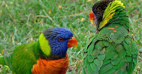 Lórios | Nova instalação do Jardim Zoológico com o apoio da farmacêutica JABA Recordati
